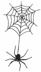 Spider Web - 19H02