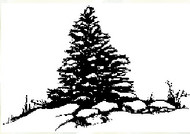 Winter Evergreen Rubber Stamp - 13S08