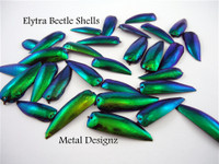 Jewel Beetle Shells