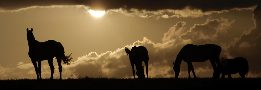 sunset-grazing-horses.png