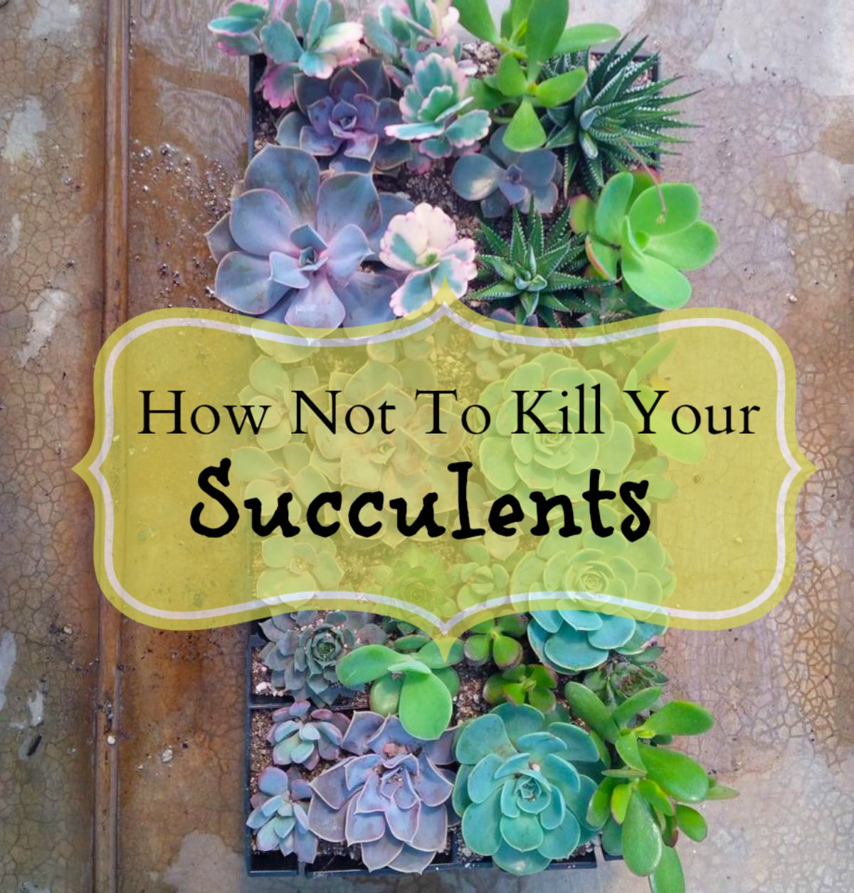 How Not To Kill Your Succulents Shop Living Walls