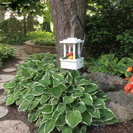 Lantern planter with solar light