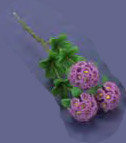 Rhododendron Stems - Purple
