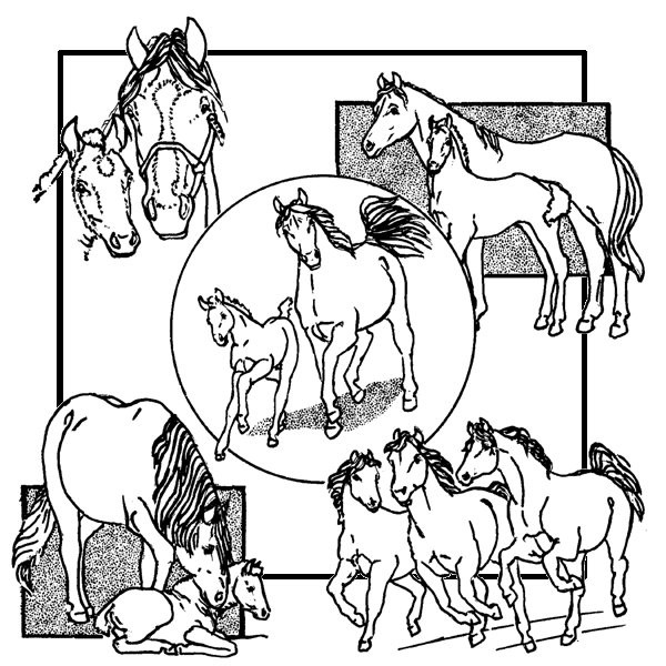 Horses and Deer Aunt Martha/'s Hot Iron Embroidery Transfer #3287
