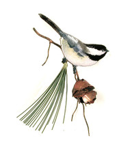 Chickadee with 3D Pine Cone by Bovano of Cheshire Metal