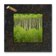 Fine art photography by David Clack mounted on slate.  Image is UV laminated onto a 12x12 slate tile with a fade and scratch resistant coating.  Every slate varies in color and shading making each piece unique. This elegant presentation is ready to hang on the wall or display on an easel.