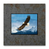 Wildlife- David Clack works with other talented wildlife photographers to apply their images onto tile. Image is UV laminated onto a 12x12 slate tile with a fade and scratch resistant coating. Every slate varies in color and shading making each piece unique. This elegant presentation is ready to hang on the wall or display on an easel.