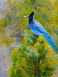 """Stellar Jay Perched"""" by Terri Sanchez 12x16"
