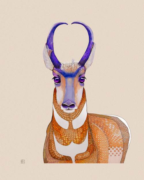 """Pronghorn Antelope"" by Brooke Connor"