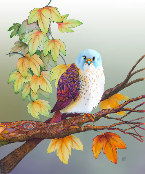 """American Kestrel"" by Brooke Connor"
