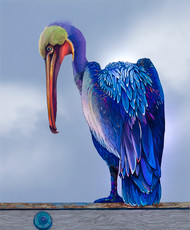 """Pelican"" by Brooke Connor"