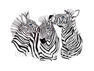 """Three Zebras"" by Brooke Connor"