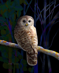 """Barred Owl"" by Brooke Connor"