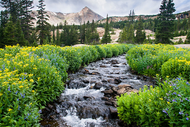 """Wildflower Wonderland"" Photograph by Colorado photographer James Frank. Lush wildflowers line stream on summer morning in the wilderness of Rocky Mountain National Park, Colorado, USA."