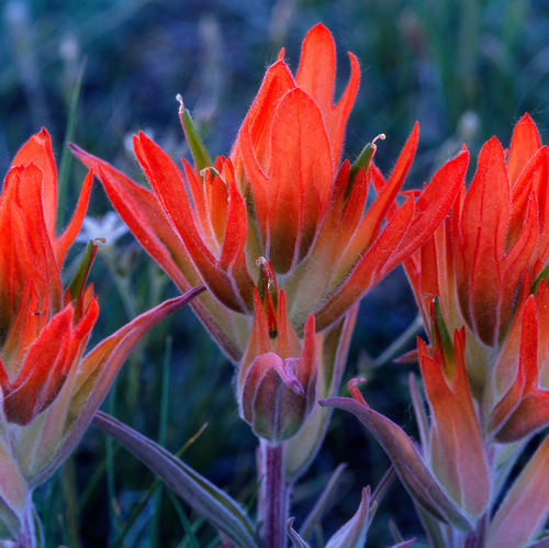 """Paintbrush Trio"" Photograph by Colorado photographer James Frank. This is a 1x1 proportion photo with a great plaque float mount and available in various sizes. All mountings include UV protection for the photograph so your photo lasts a lifetime."
