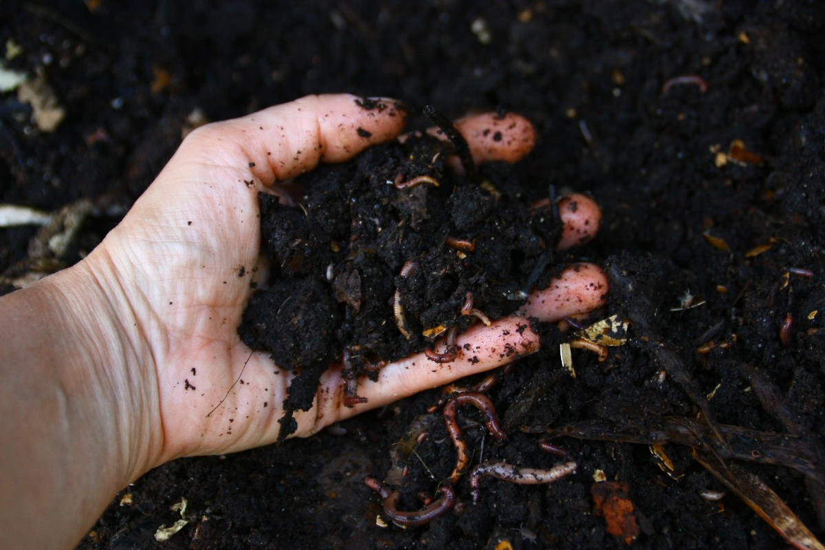 Holding a handful of compost