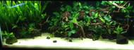 10 Easy Aquarium Plants Pack