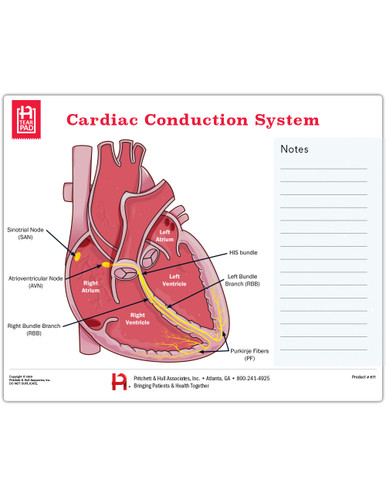 Cardiac Conduction System Tearpad (50 sheets per pad) (671)