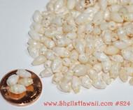 150 mix size Laiki shells from Niihau #824