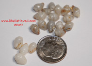 15 Blue Momi shells from Niihau #2057