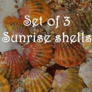 Set of 3 Sunrise shells #387-388-394