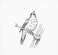 Nightingale in Berkley Square  *SOLD*