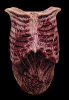 Walking Dead Walker Gore Chest Zombie Rotted Flesh Halloween Costume Accessory