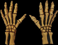 Bone Colored Skeleton Reaper Gloves Monster Arms Hands Halloween Costume Accessories