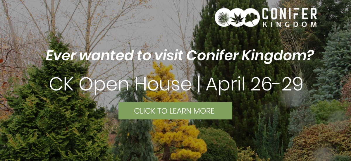 Conifer Kingdom Open House Event