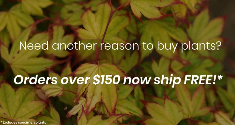 Conifer Kingdom Online Tree Nursery Shipping Available