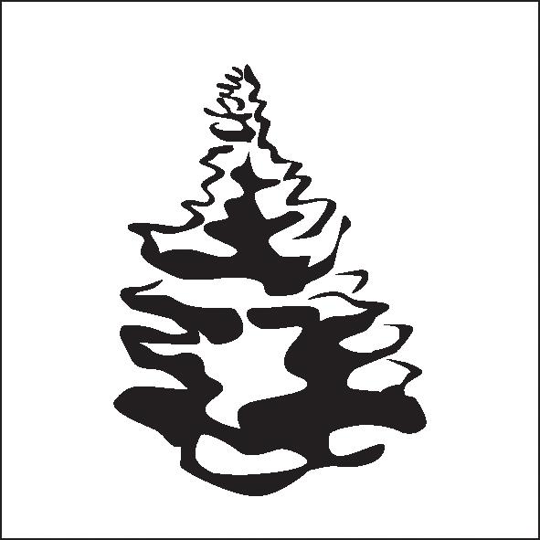 1-conical-spruce-or-fir-silberlocke.png