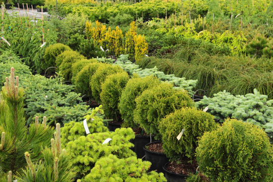 conifer-nursery-section-overview-resized.jpg