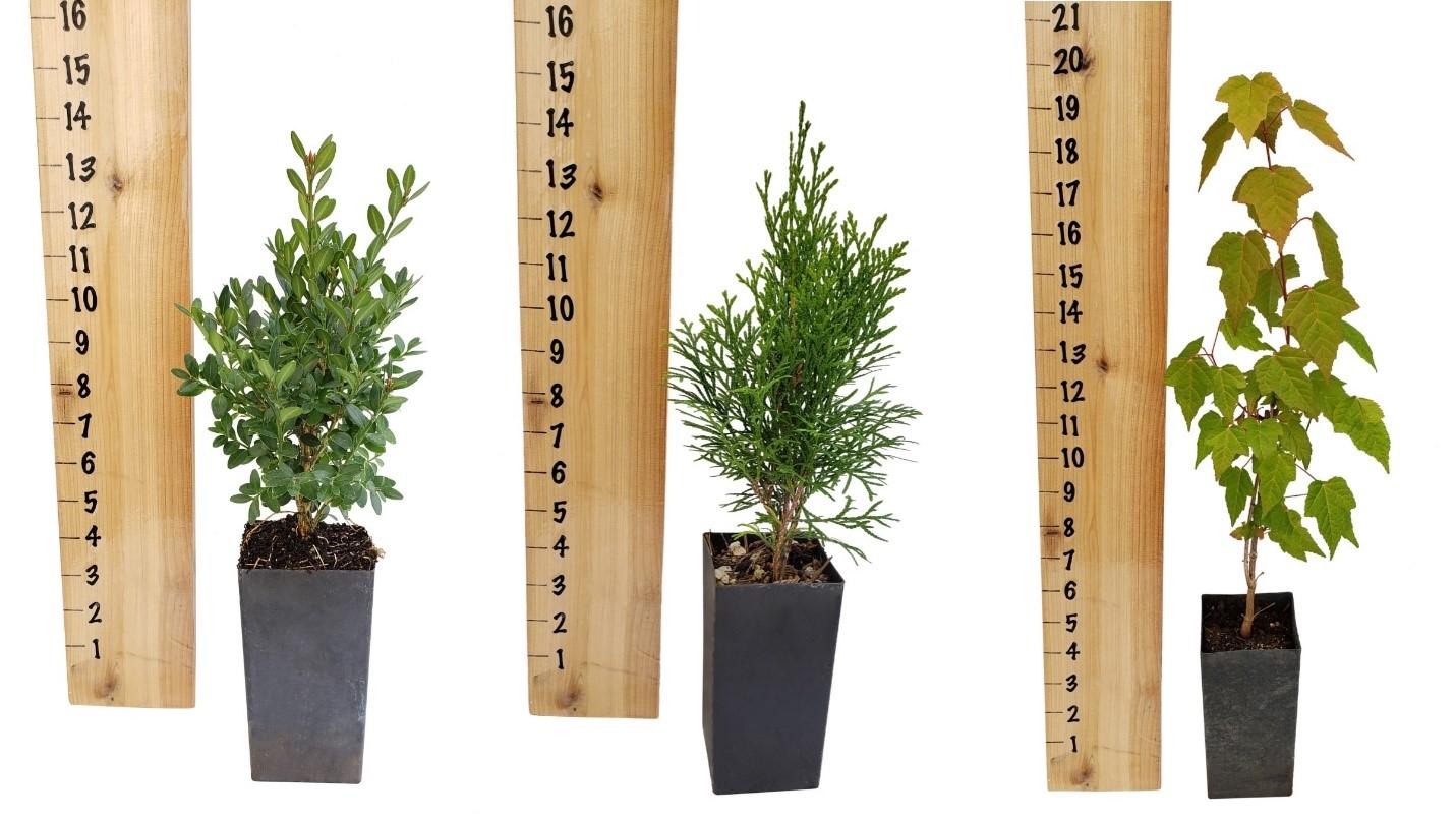 tree-pot.jpg