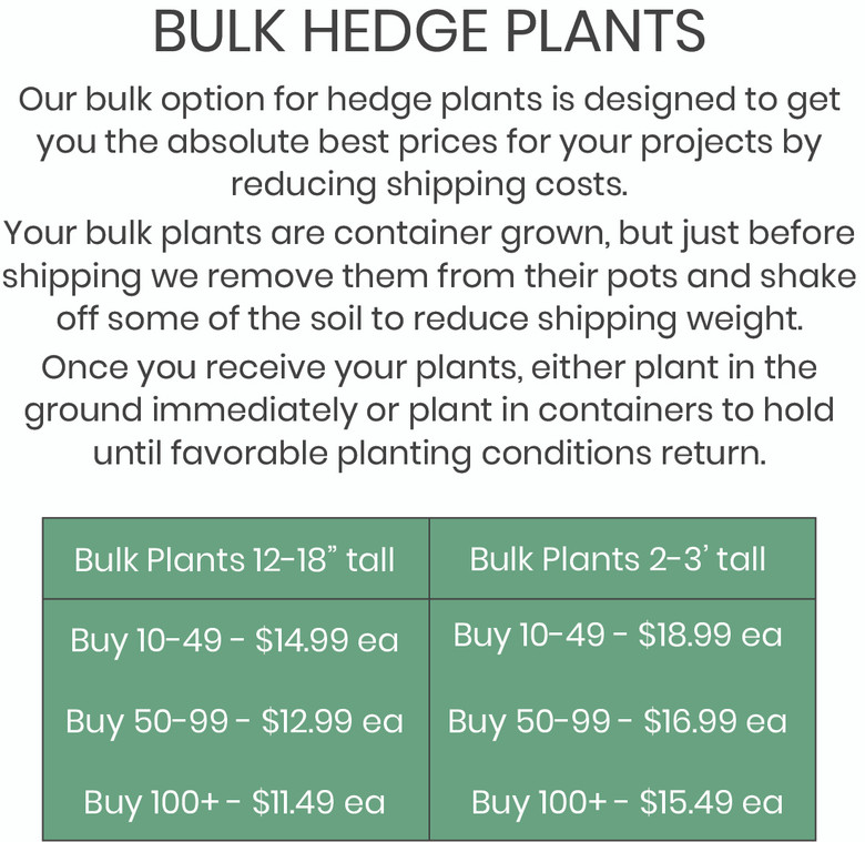 Our bulk option for hedge plants is designed to get you the absolute best prices for your projects by reducing shipping costs.  Your bulk plants are container grown, but just before shipping we remove them from their pots and shake off some of the soil to reduce shipping weight. Once you receive your plants, either plant in the ground immediately or plant in containers to hold until favorable planting conditions return.