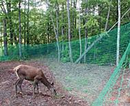 Deer Fence Mesh Green