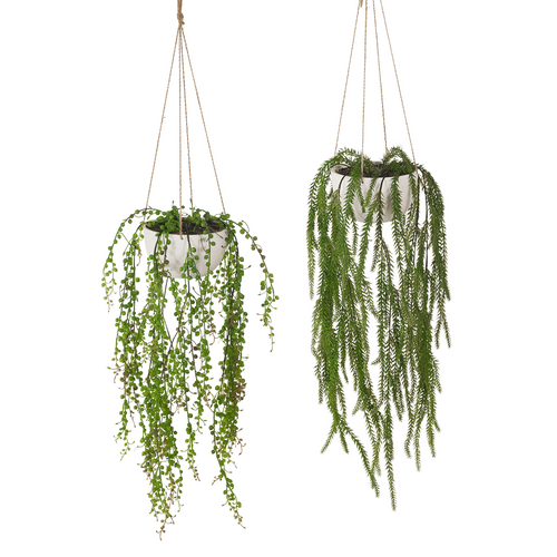 Green Fern , Succulent Hanging Bowl. Each sold separately