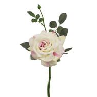 Cream & Pink Garden Diamond Rose - 35cm