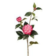 Fuschia Camellia Stem
