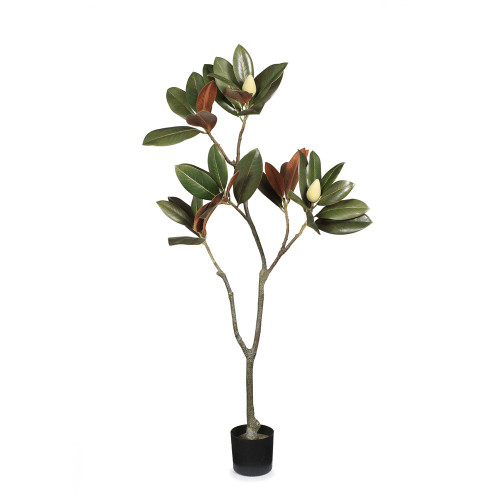 Green & Brown Potted Magnolia Tree