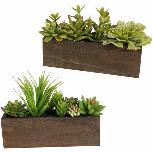 RAZ Wooden Box with Succulents (2 Designs)