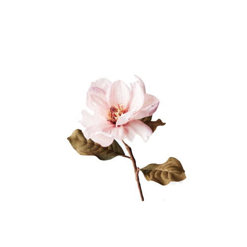 Light Mauve Magnolia