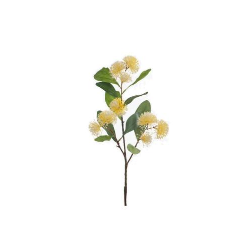 Yellow Sweet Gum Blossom