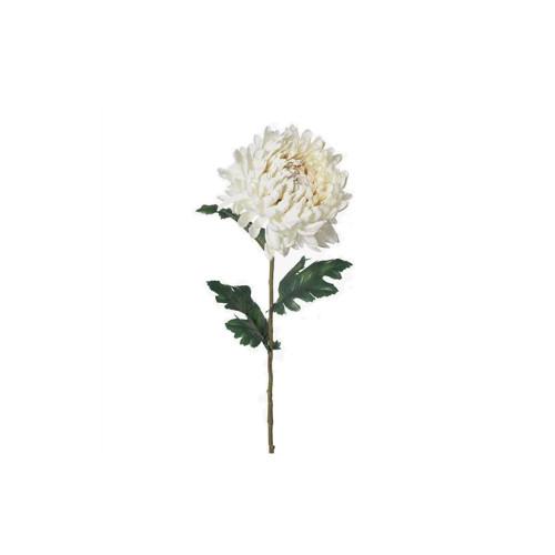 Cream Chrysanthemum