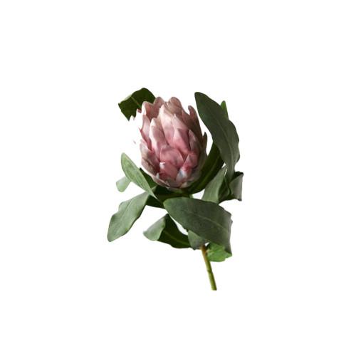 Light Pink Protea Queen