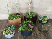 Custom Design Succulents - Washington DC - Rockville MD – Palace Florists