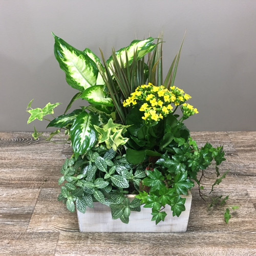Woodland Planter showcases an assortment of lush green and blooming plants in a rustic wood planter box in Washington DC, Palace Florists