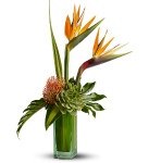 Birds of Beauty showcases Birds of Paradise, succulents and pin cushion protea accented with hala and monstera leaves and other fresh greenery delivered in a modern vase in Rockville MD, Palacec Florists