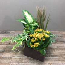 Green and Blooming Planter Garden in ceramic container in Washington DC, Palace Florists