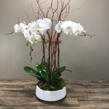 Cluster of White Orchids - Local Delivery Only - Call for Pricing