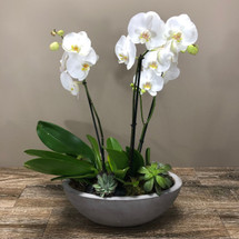Orchids and Succulents - Local Delivery Only - Call for Pricing